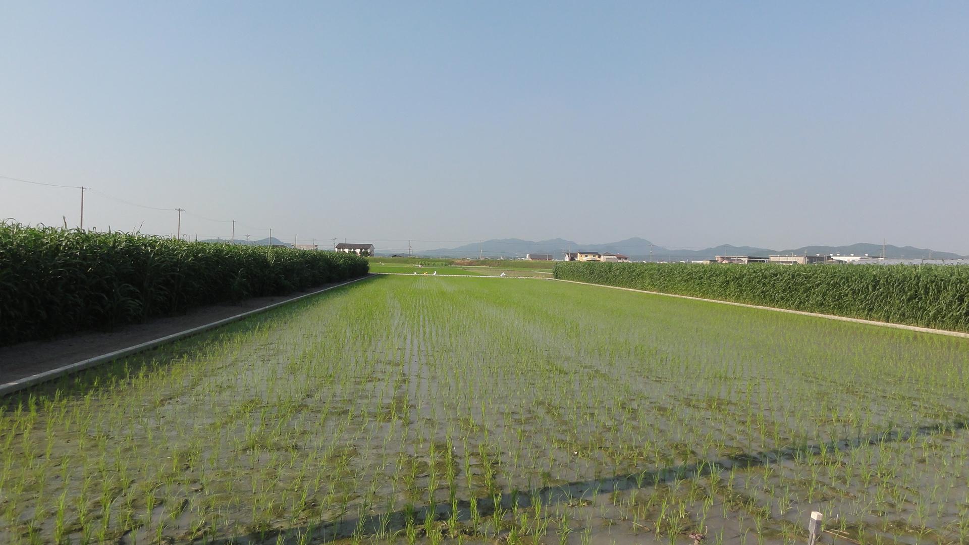 吉備国際大学地域創成農学部を訪問   あわじ環境未来島